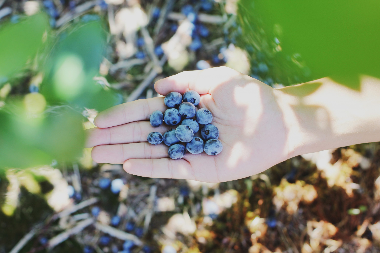 Hulp bij wildplukken: zo verzamel je zelf je eten uit de natuur