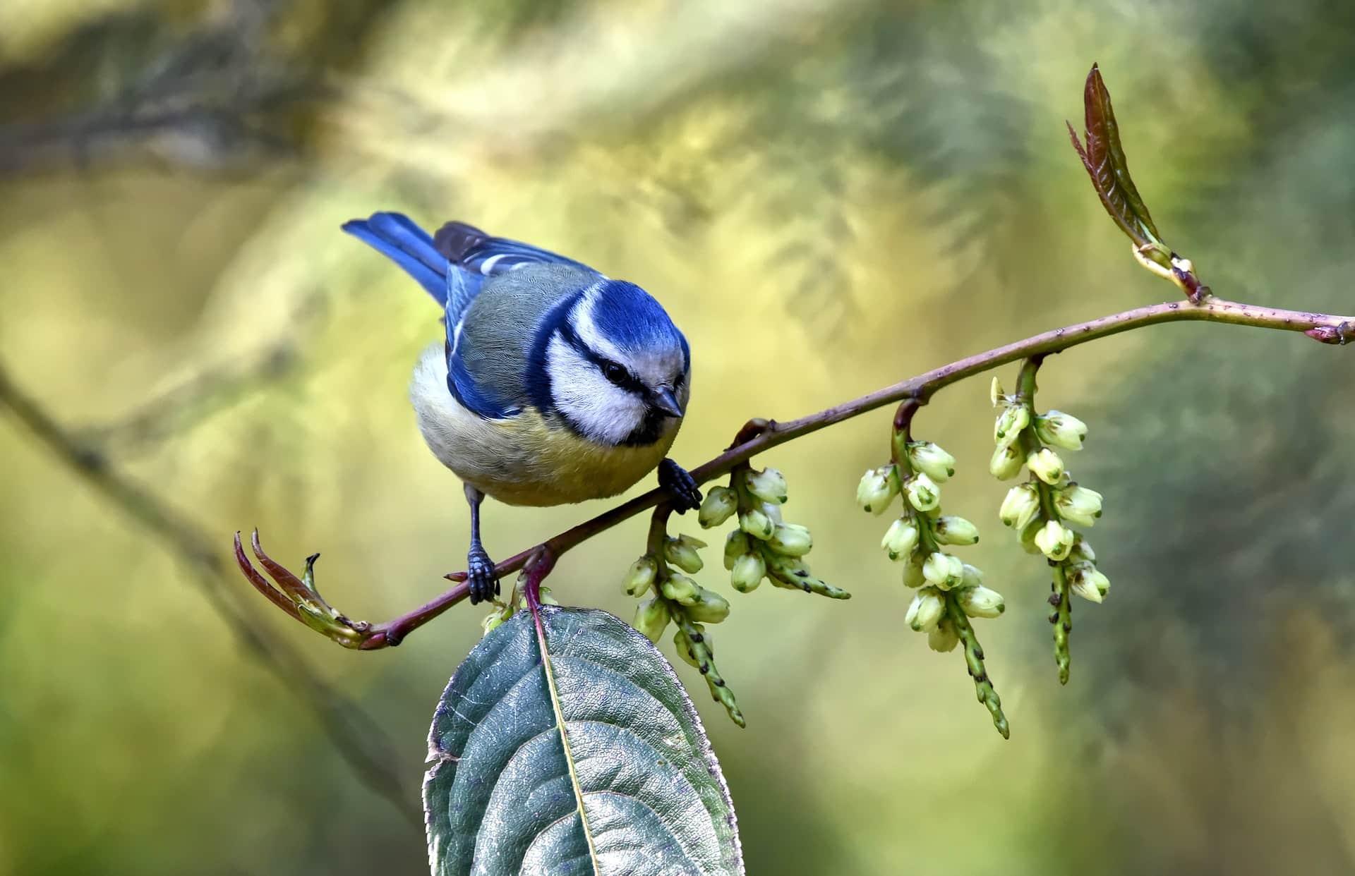 vogelkennis