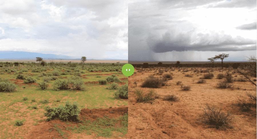Zo maakt Justdiggit dor en uitgeput land weer groen