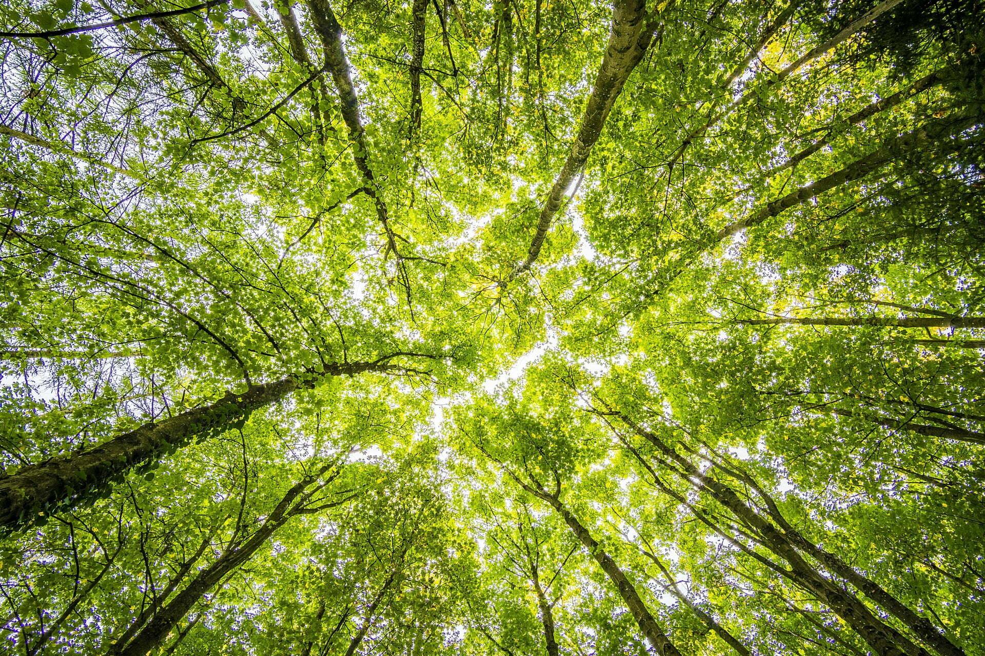 3 miljard bomen
