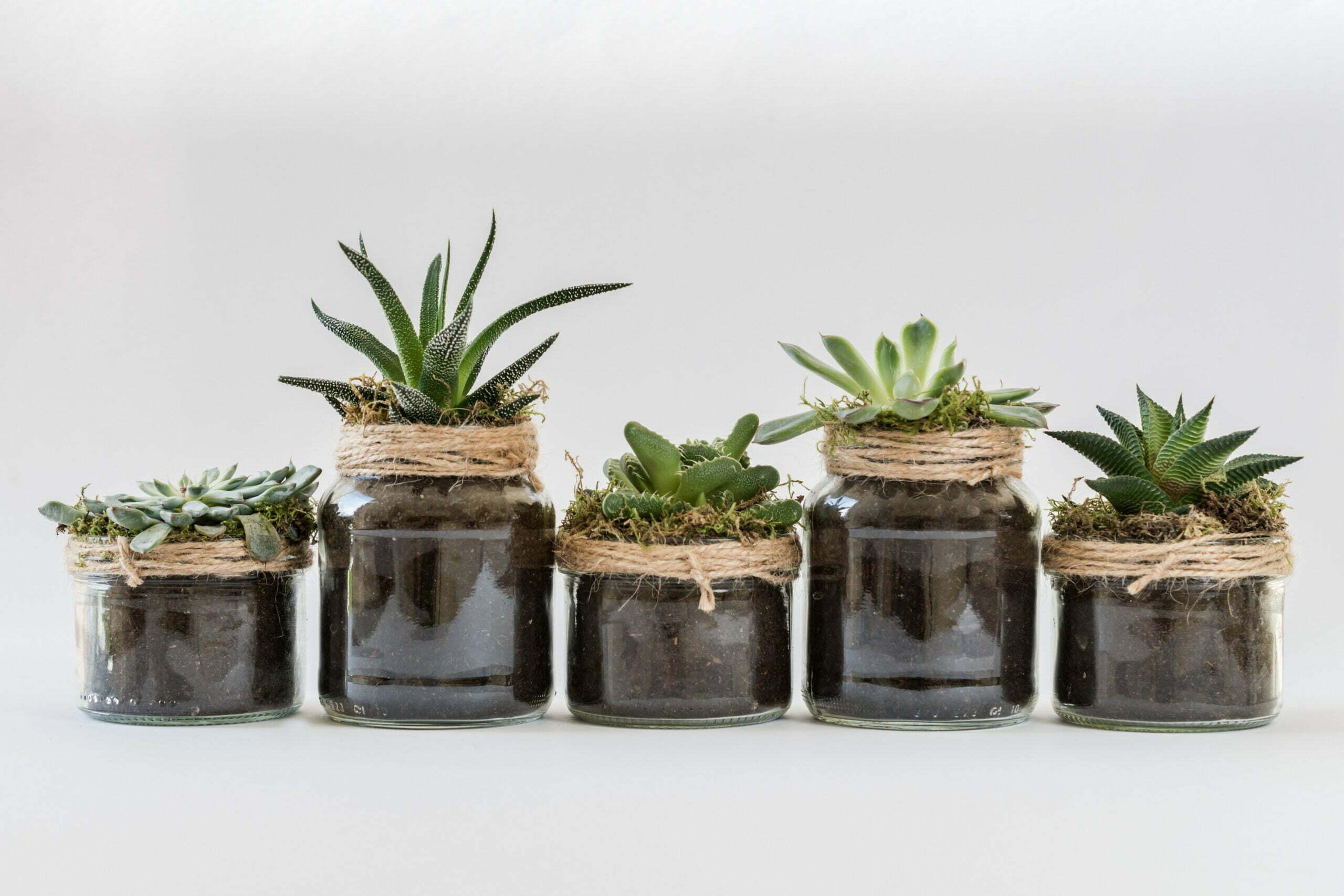 vijf planten op een rij die weinig verzorging nodig hebben