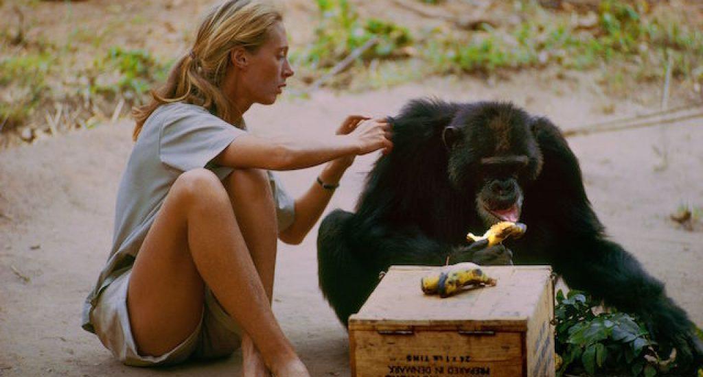Documentaire op IDFA of Jane Goodall en haar onderzoek naar chimpansees in Tanzania.