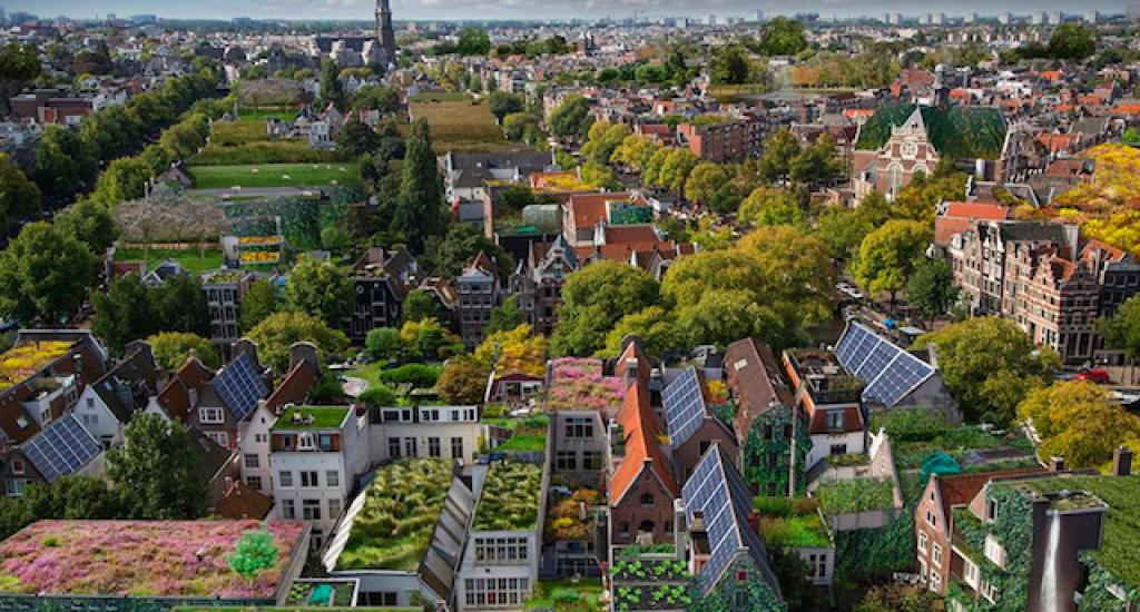 Rooftop Revolution - Alice Wielinga