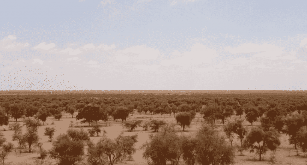 The Great Green Wall Afrika