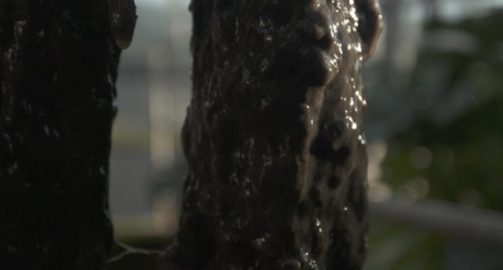 Tegenlicht afvalwater. Foto: still uit video