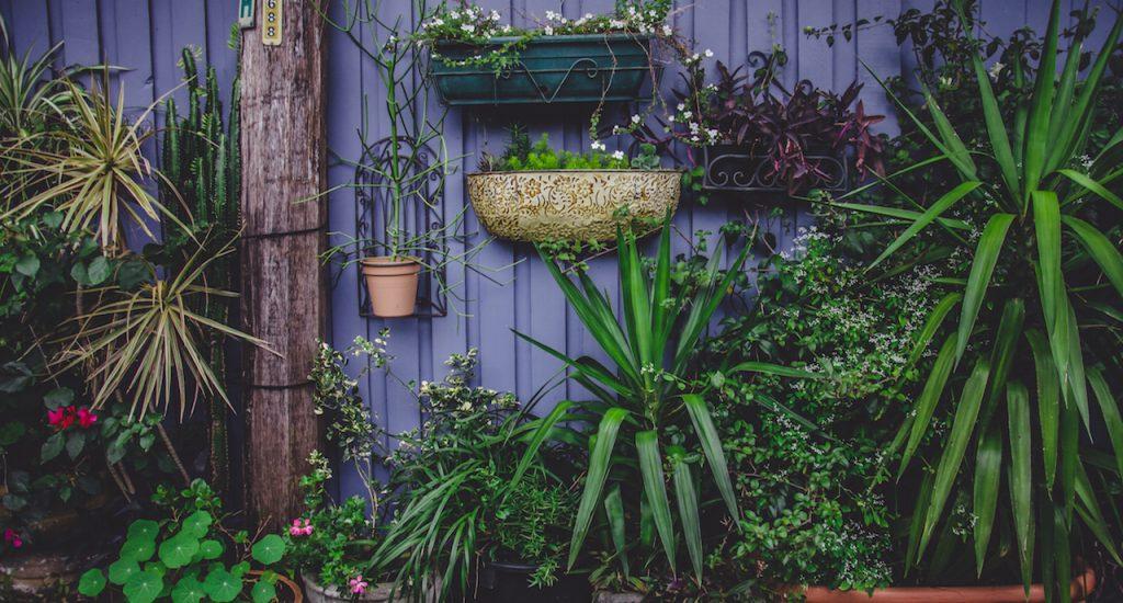 Tweedehands planten