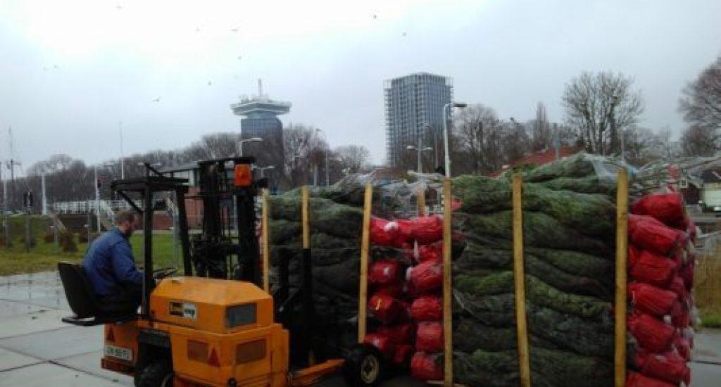 kerstbomenbos in Amsterdam Noord