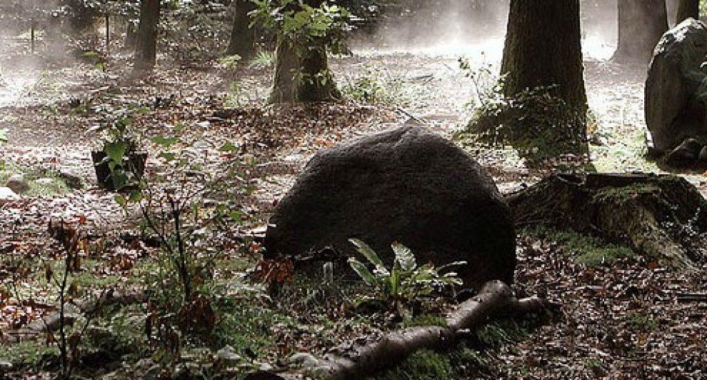Een natuurbegraafplaats op de Veluwe. Foto: Frans, Flickr