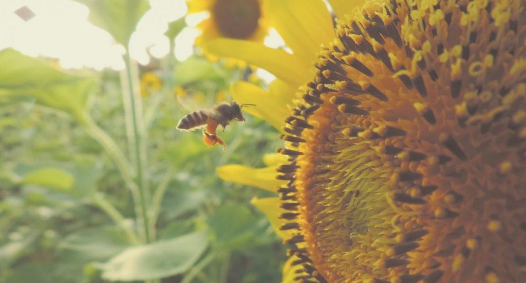 Bee Inc.