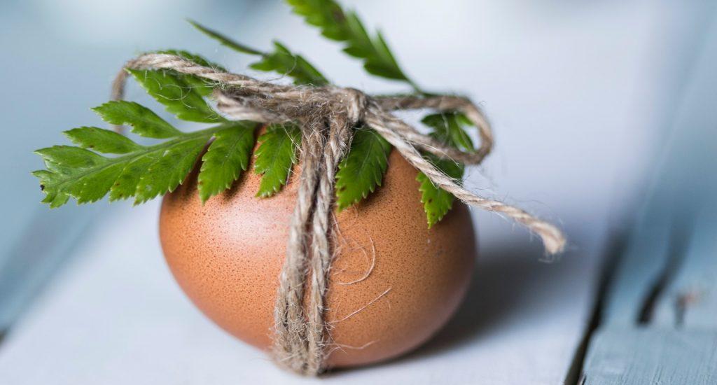 plantaardige alternatieven voor ei