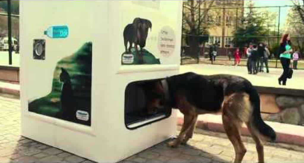 Recycling plastic flesjes voert zwerfhonden. Foto: still uit youtube video