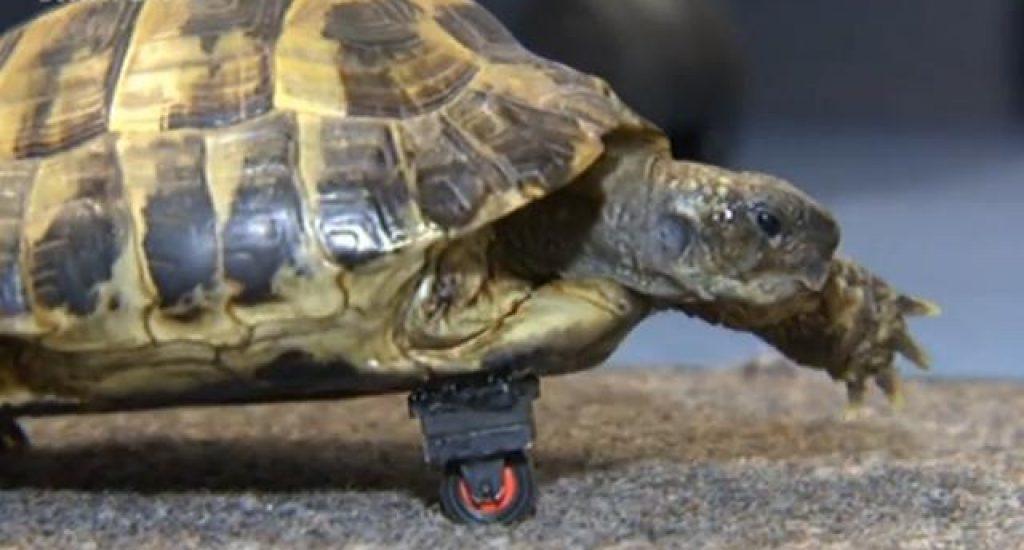 Schildpad met legowiel. Foto: still uit youtube video